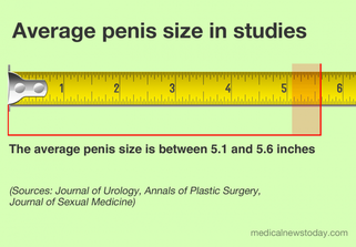 Penis Size Important ?
